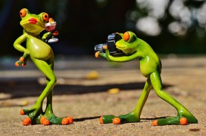 frogs taking pictures