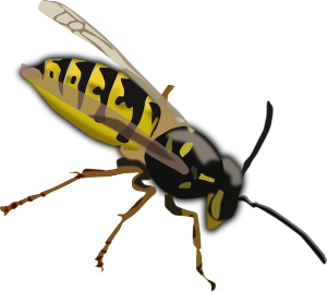 drawn wasp
