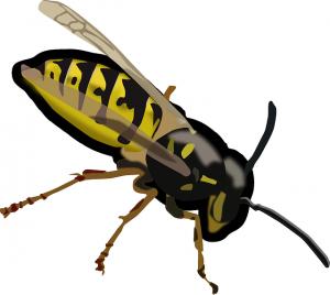 drawn wasp