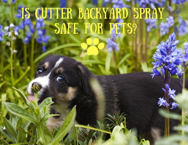Is Cutter Backyard Spray Safe for Pets?